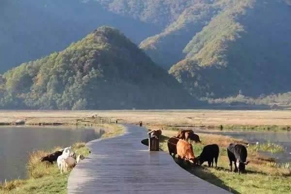 神农架、大九湖、神农溪三日游