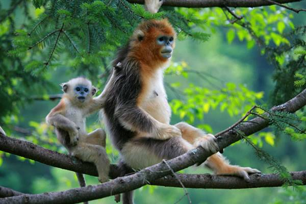 神农架国家级自然保护区