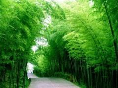 三峡竹海大峡谷精彩一日游