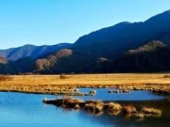 宜昌出发醉美大九湖、探秘神农溪、穿越神农架三日游