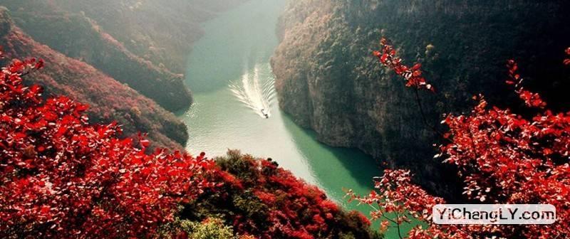巫山红叶节广告
