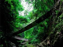 宜都九凤谷一日游_三峡九凤谷生态旅游景区一日游