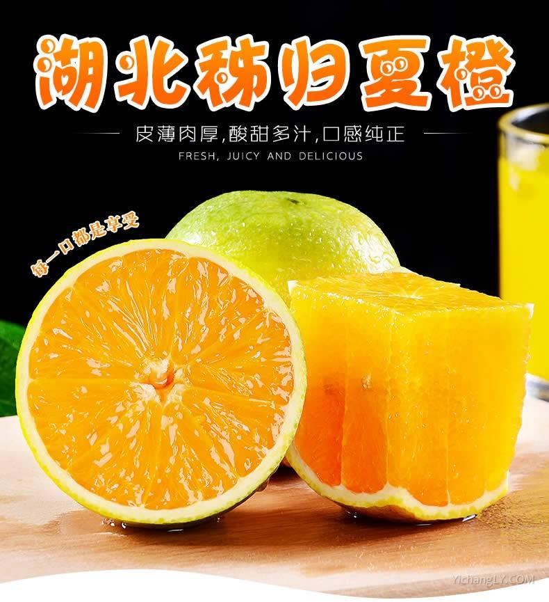 现摘秭归脐橙新鲜夏橙10斤装