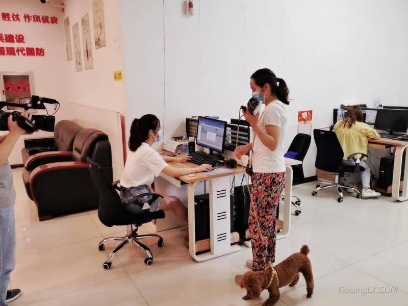 宜昌首张电子犬牌发放