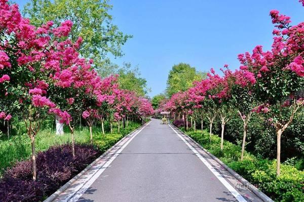 武汉紫薇都市田园