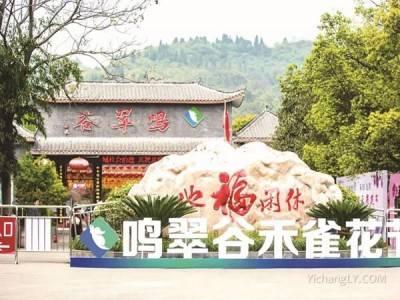 鸣翠谷风景区观禾雀花,赏龙藤好玩吗?