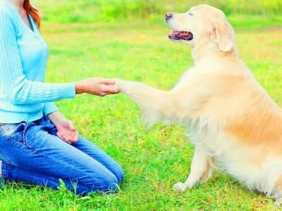 宜昌启动文明养犬专项整治行动