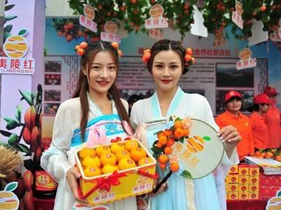 第八届宜昌(夷陵) 柑橘节同步举行